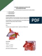 Doccumento Bases Anatomicas