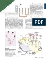 Biology 6th Ed