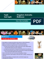 Kingdomanimalia Invertebrata Mollusca 130220211426 Phpapp01
