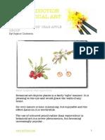 Intro to Botanical Art