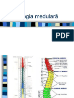Patologia medulara