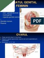 Curs 10 - Aparatul Genital Feminin