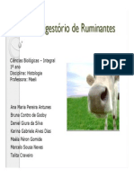 seminario_ruminantes