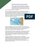 Blog Piece - El Niño and the Galapagos Penguin - Jose H. C. Farn