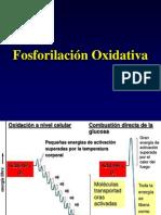09 Fosforilacion Oxidativa
