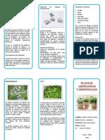 Triptico Plantas aromaticas