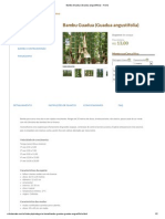Bambu Guadua (Guadua Angustifolia) - Home