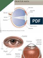 Fungsi Dan Struktur Mata Shela