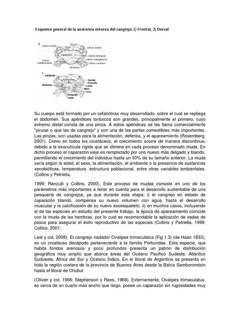 Esquema General de La Anatomía Externa Del Cangrejo