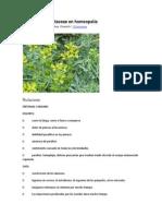 Familia de Las Rutaceae en Homeopatía