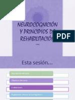01 Principios de Organizacion Cerebral