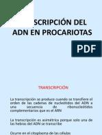 Transcripción en Procariotas (1)