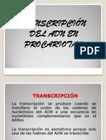 Transcripción en Procariotas Modificado