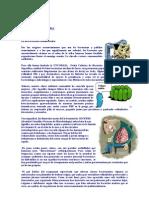 Carta de Las Bacterias