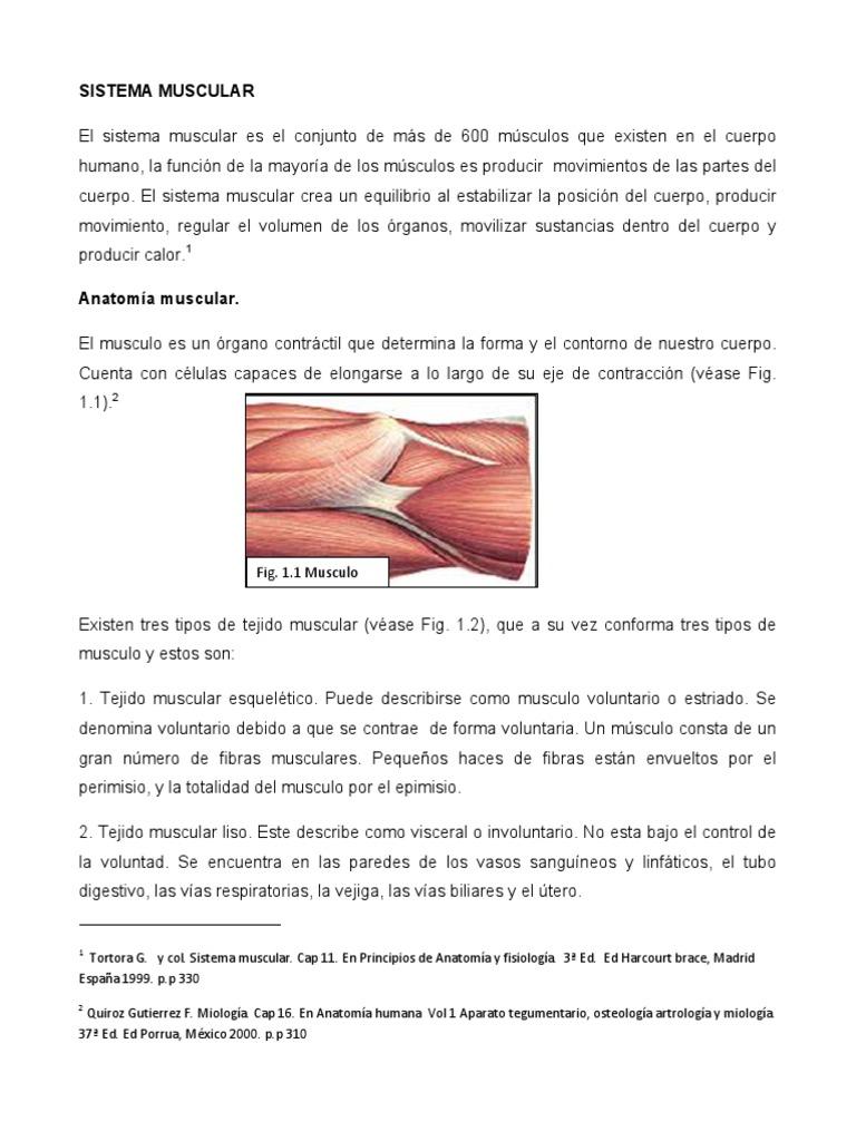 Sistema-Muscular.pdf