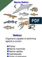 Nekton Notes.ppt
