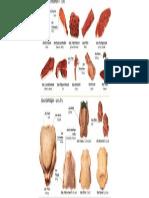 Meat Parts
