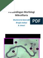 Perbandingan Morfologi Mikrofilaria