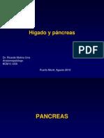 Clase Higado y Pancreas