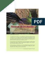 Incubacion-pavo Real & Otros