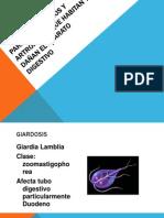 Parásitos, Hongos y Artrópodos Digestivo