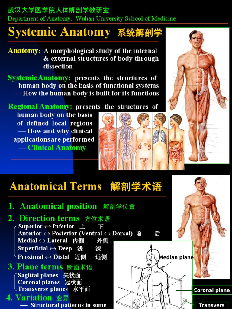 01introduction Skeleton Bone Anatomical Terms Of Location