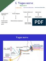 Cranial nerves(III)