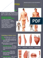 general discription of muscles