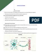 Anatomi Sel Saraf 3