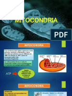 Expo Mitocondria