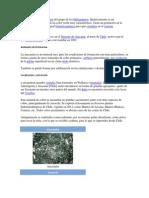 La Atacamita Es Un Mineral Del Grupo de Los Halogenuros