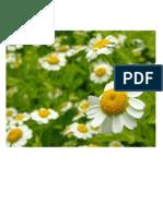 imagen de plantas medicinales