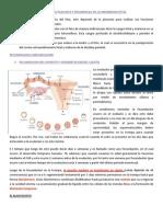 IMPLANTACION Embiogenesis y Desarrollo Fetal