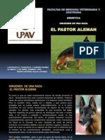 Historia Del Pastor Aleman