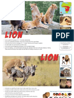 Info sheets about lions.