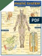 QuickStudy - Lymphatic System