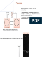 Plasmids Rpathania