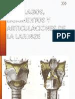 CARTÍLAGOS, LIGAMENTOS Y ARTICULACIONES DE LA LARINGE.pptx