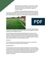El Futbol 7