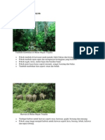 Ciri hutan hujan
