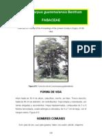 Lonchocarpus guatemalensis
