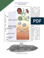 Plantas Fotosintesis y Energias Reacciones