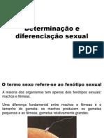 Aula de Determinação Do Sexo_karine