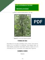 Magnolia Schiedeana