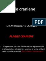Lp 1 Plagile Craniene