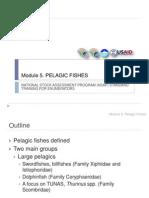 Module 05 Common Pelagic Fish Species-gina-jean