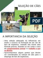 Seleção de Cães - Apresentação