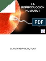 6-6y11-4-reproduccinii-130307034621-phpapp02