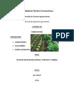 Plantas Medicinales (Ortiga, Torongil y Perejil)