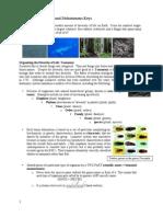Lab 06 Classification and Dichotomous Keys